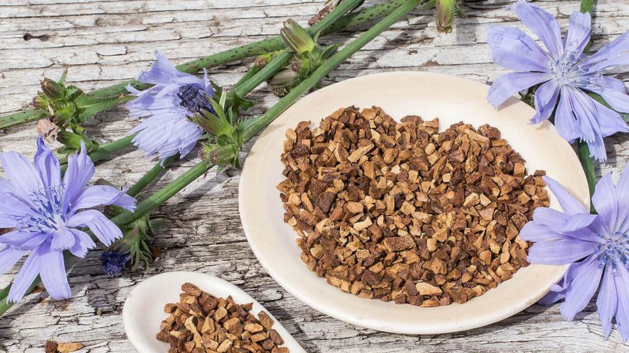Cikorija kao lijek melem za crijeva, probavu i dobro zdravlje - Ljekovito bilje