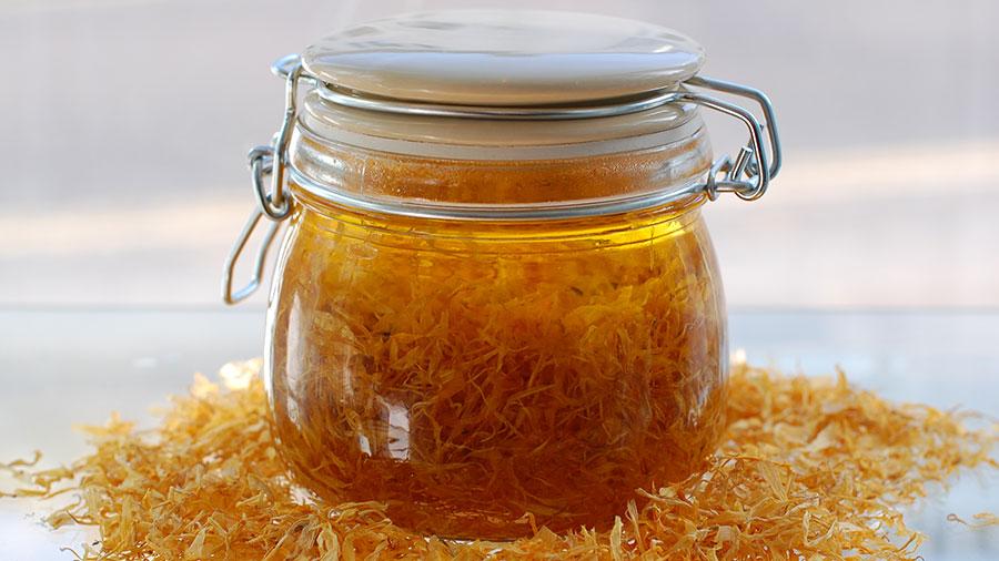 Čemu služi ulje (macerat) od cvijeta maslačka - Ljekovito bilje