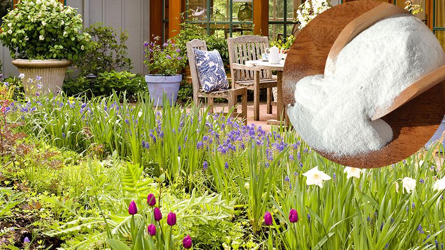 Soda bikarbona u bašti: Odlična zamena za pesticide! Hrani biljke, odbija puževe! - Ljekovito bilje