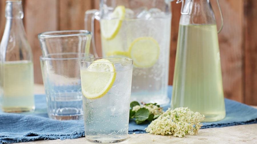 Zova leči sve od pluća do raka: Evo kako se pravi sok, čaj i lekoviti med! (RECEPT) - Ljekovito bilje