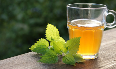 Čaj od koprive – moćan napitak za liječenje mnogih bolesti - Ljekovito bilje