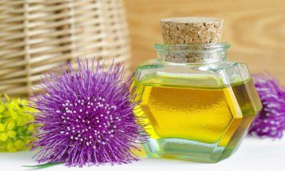 Napravite ulje od čička - Ljekovito bilje