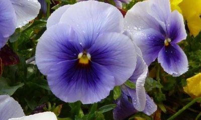 Junske biljke: Hajdučka i gospina trava za ženske bolesti, dan i noć za čišćenje krvi