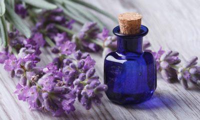 Ulje lavande – Prednosti i priprema - Ljekovito bilje
