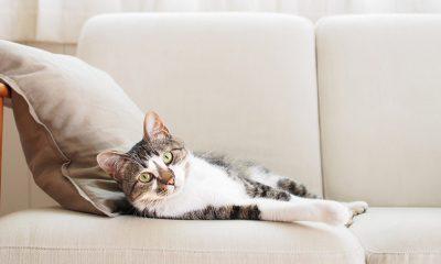 Pratite ponašanje mačke: NAJBRŽE PREPOZNAJU LOŠE LJUDE I NEGATIVNU ENERGIJU!