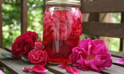 Od ružinih latica pripremite ljekoviti čaj, sirup, ocat i rakiju - Ljekovito bilje