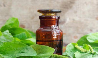 Tradicionalni recept kako se pravi sirup od bokvice – Blagodat za respiratorne organe - Ljekovito bilje