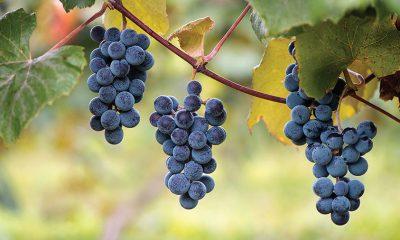 U njemu su i lepota i zdravlje: Ovo voće će učiniti čuda za organizam, a vaša koža i kosa će procvetati! (RECEPTI) - Ljekovito bilje