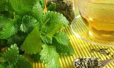Čudo narodne medicine: Ovaj napitak ublažava depresiju, leči anksioznost i stres! - Ljekovito bilje