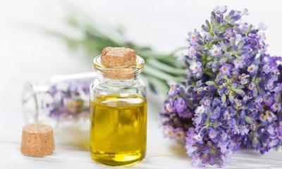 Tinktura od valerijane: Moćan narodni lek koji leči želudac, snižava krvni pritisak i smanjuje napetost! (RECEPT) - Ljekovito bilje