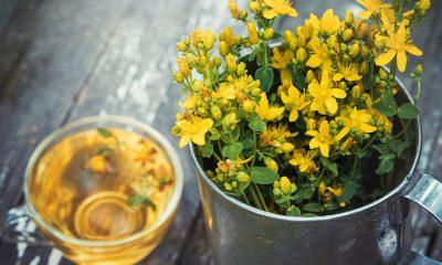 Ova biljka je dostupna svima, leči sve, a čaj od nje koristili su stari Grci i Rimljani - Ljekovito bilje